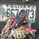 IFFB2012-Downeast